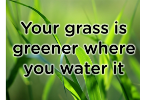Your grass is greener